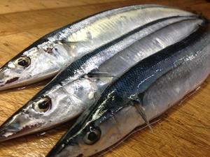 秋刀魚 (生サンマ) ✈