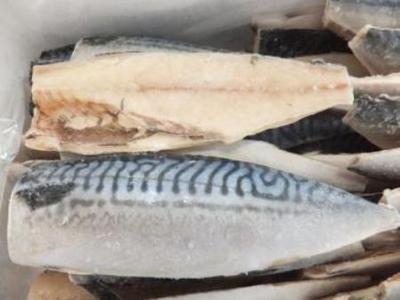 鯖魚柳 (サバ)