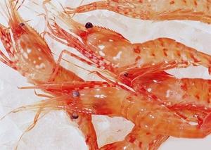牡丹蝦(25-33) (ぼたんえび-L)