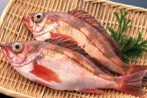 目張魚 (メバル) ✈